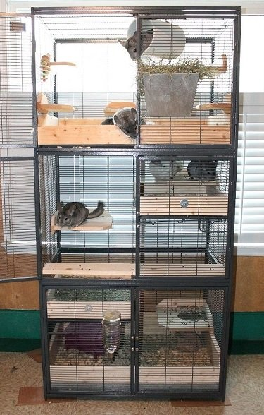 helping stressed chinchillas