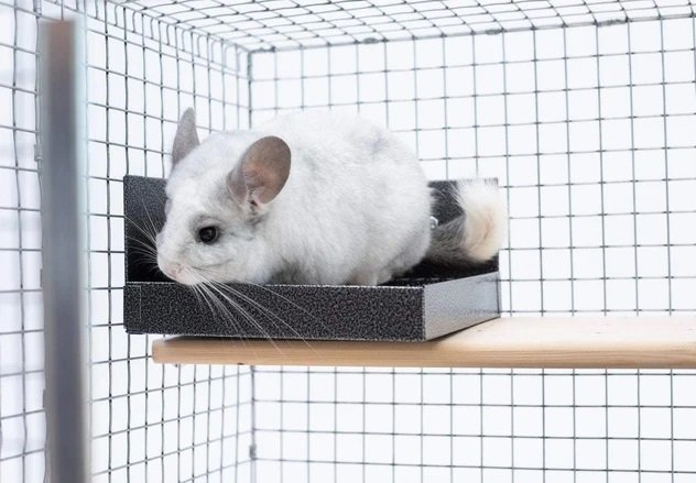How to keep chinchilla cage from smelling